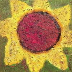 Descargar Never Shout Never - Sunflower [2013] MEGA